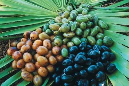 Saw Palmetto: The Natural Rogaine?